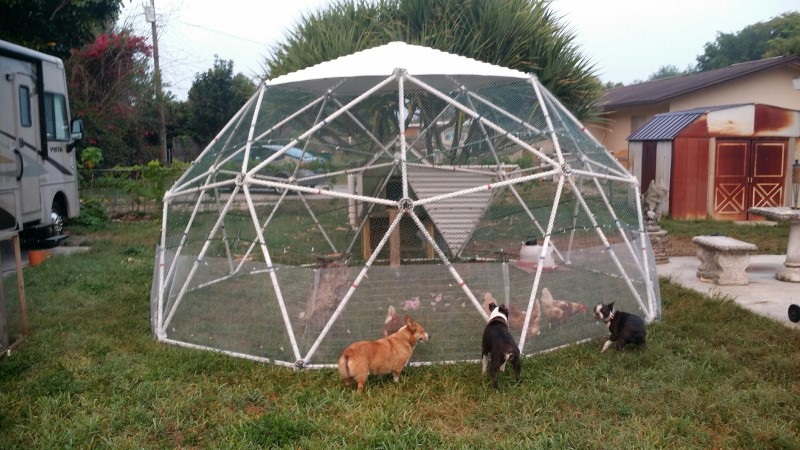 Tom Walsh   Customer Review Of Our Geodesic Chicken Coop Kit